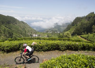 Biking through a tea plantation in Sri Lanka